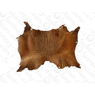 FROG WHOLE  SKIN LIGHT BROWN SHINY / ca. 10x4cm